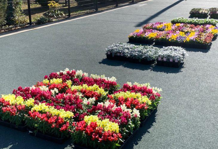 お花の配布イメージ