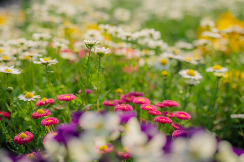 お花のイメージ